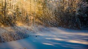 Δασική λίμνη το χειμώνα Στοκ Εικόνα
