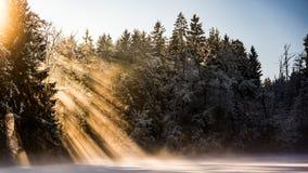 Δασική λίμνη το χειμώνα Στοκ φωτογραφία με δικαίωμα ελεύθερης χρήσης