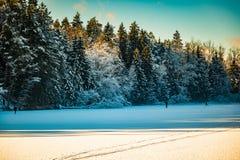Δασική λίμνη το χειμώνα Στοκ Φωτογραφίες