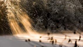 Δασική λίμνη το χειμώνα Στοκ Εικόνες