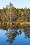 Δασική λίμνη Στοκ Φωτογραφία