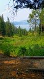 Δασική λίμνη Στοκ φωτογραφία με δικαίωμα ελεύθερης χρήσης