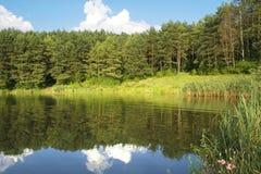 Δασική λίμνη Στοκ εικόνες με δικαίωμα ελεύθερης χρήσης