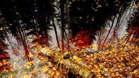 Δασική λίμνη Στοκ Εικόνες