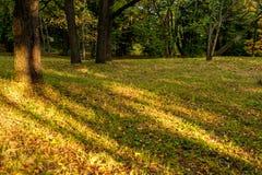 Δασική ανασκόπηση φθινοπώρου Στοκ Φωτογραφία