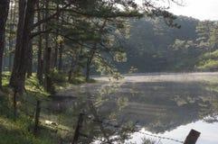 Δασική αντανάκλαση πεύκων στη λίμνη στην ανατολή Χρήση εικόνων για τη διαφήμιση, το σχέδιο, την εκτύπωση, το υπόβαθρο και την κάλ στοκ εικόνα
