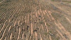 Δασική αποκατάσταση Συντήρηση οικολογίας Εναέριος πυροβολισμός απόθεμα βίντεο