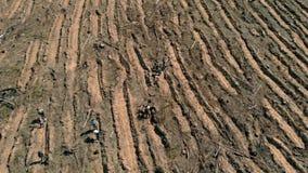 Δασική αποκατάσταση Συντήρηση οικολογίας Εναέριος πυροβολισμός φιλμ μικρού μήκους