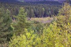 Δασική δασώδης περιοχή Στοκ Φωτογραφία