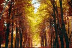 Δασική αλέα παραμυθιού φθινοπώρου Στοκ εικόνα με δικαίωμα ελεύθερης χρήσης
