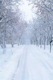 Δασική αλέα χιονιού Χειμερινό πάρκο με τα δέντρα χιονιού και δρόμος στο λευκό Στοκ Φωτογραφίες