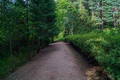 Δασική αλέα Στοκ φωτογραφίες με δικαίωμα ελεύθερης χρήσης