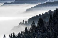 Δασική βουνοπλαγιά στη χαμηλή να βρεθεί ομίχλη κοιλάδων με τις σκιαγραφίες των αειθαλών κωνοφόρων που τυλίγονται φυσικό σε χιονώδ Στοκ φωτογραφία με δικαίωμα ελεύθερης χρήσης