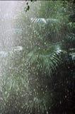 δασική βροχή Στοκ Φωτογραφίες