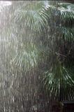 δασική βροχή Στοκ εικόνες με δικαίωμα ελεύθερης χρήσης