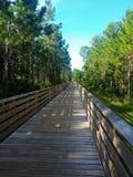Δασική γέφυρα στοκ φωτογραφία με δικαίωμα ελεύθερης χρήσης