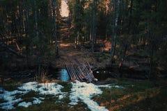 Δασική γέφυρα στοκ εικόνες