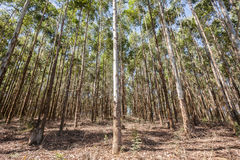 Δασική γεωργία φυτειών δέντρων στοκ εικόνες