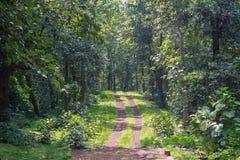 Δασική διαδρομή του εθνικού πάρκου στην Ινδία στοκ εικόνες με δικαίωμα ελεύθερης χρήσης
