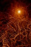 δασική ελαφριά νύχτα Στοκ εικόνα με δικαίωμα ελεύθερης χρήσης