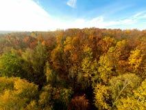 Δασική εναέρια άποψη δέντρων φθινοπώρου Στοκ εικόνες με δικαίωμα ελεύθερης χρήσης