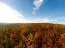 Δασική εναέρια άποψη δέντρων φθινοπώρου Στοκ Εικόνες