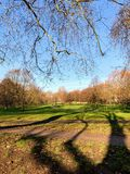 Δασική ευκολία σύννεφων δέντρων σκιών στοκ εικόνες