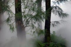 Δασική ελαφριά ομίχλη Στοκ Φωτογραφίες