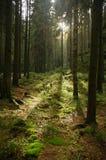 Δασική ηλιοφάνεια Στοκ φωτογραφίες με δικαίωμα ελεύθερης χρήσης