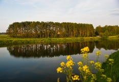 δασική θερινή όψη λιμνών Στοκ φωτογραφία με δικαίωμα ελεύθερης χρήσης