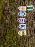 Δασική διαδρομή στοκ φωτογραφία με δικαίωμα ελεύθερης χρήσης