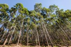 Δασική καλλιέργεια φυτειών δέντρων στοκ φωτογραφίες με δικαίωμα ελεύθερης χρήσης