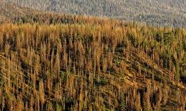 Δασική Καλιφόρνια Στοκ φωτογραφίες με δικαίωμα ελεύθερης χρήσης