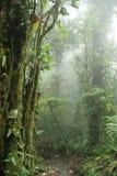 Δασική κονσέρβα φύσης σύννεφων Monteverde - πλευρά Ri Στοκ φωτογραφίες με δικαίωμα ελεύθερης χρήσης