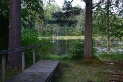 Δασική λίμνη ακτών το καλοκαίρι Στοκ Εικόνες