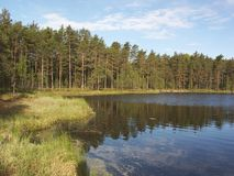 δασική λίμνη ακτών Στοκ εικόνα με δικαίωμα ελεύθερης χρήσης