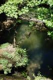 δασική λίμνη γεφυρών Στοκ φωτογραφίες με δικαίωμα ελεύθερης χρήσης
