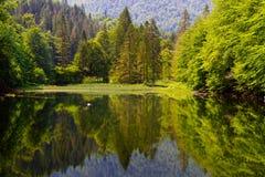 Δασική λίμνη Στοκ Φωτογραφίες