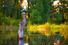 Δασική λίμνη, Bashkortostan, Ρωσία στοκ φωτογραφίες με δικαίωμα ελεύθερης χρήσης