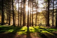 Δασική μέγιστη περιοχή Αγγλία UK Στοκ φωτογραφία με δικαίωμα ελεύθερης χρήσης