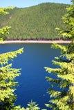 δασική μέση λιμνών Στοκ Εικόνες