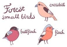 Δασική μικρή συλλογή πουλιών Στοκ Φωτογραφία