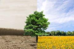 Δασική ξηρασία και δασική αναζωογόνηση στοκ φωτογραφία με δικαίωμα ελεύθερης χρήσης