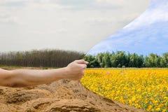 Δασική ξηρασία και δασική αναζωογόνηση στοκ εικόνα με δικαίωμα ελεύθερης χρήσης