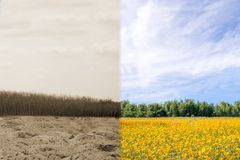 Δασική ξηρασία και δασική αναζωογόνηση στοκ εικόνες