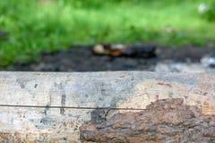 Δασική ξύλινη σύσταση Στοκ φωτογραφίες με δικαίωμα ελεύθερης χρήσης