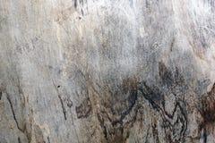Δασική ξύλινη σύσταση Στοκ Εικόνες