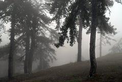 Δασική ομίχλη στοκ εικόνα