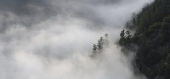 Δασική ομίχλη στοκ φωτογραφίες