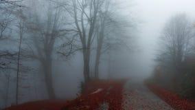 Δασική πορεία κατά τη διάρκεια του φθινοπώρου στοκ εικόνες με δικαίωμα ελεύθερης χρήσης